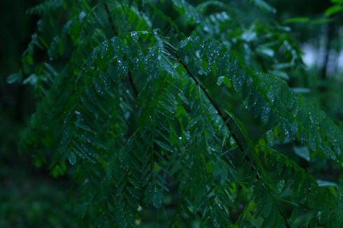 rain0001